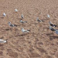 чайки :: Елена Аксамит