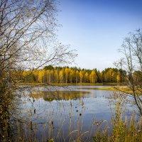 «Золотая осень» :: Александр Гладких