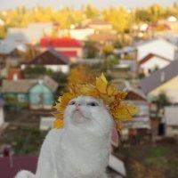 ВОТЬ!!!! :: Наталья Меркулова