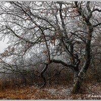 Первый снег :: Александр Богатырёв