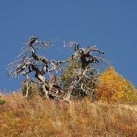 Сказочное дерево :: Виктор Наливайко