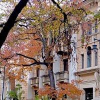 дерево с красными листьями :: Елена Аксамит