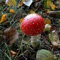 Красная шапочка в горошек.. :: Антонина Гугаева