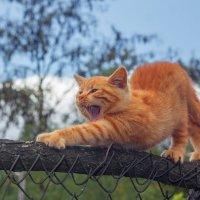 Эй, не стойте слишком близко -  Я тигрёнок, а не киска! :: Евгений Воропинов