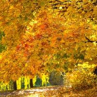 Золото октября... :: Владимир Жданов
