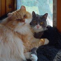 Фунтик (слева) и Ириска (справа) :: Ольга И