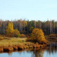 Золотая осень :: Анна Суханова