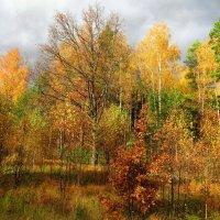 Разноцветный осенний лес :: Андрей Снегерёв