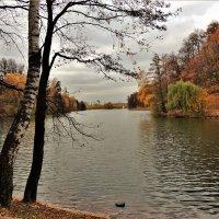Осень на Царицынских прудах :: Вячеслав Маслов