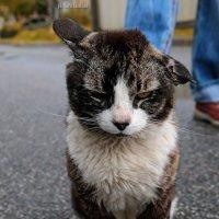 Гроза района - соседский кот :: Майя Жинка