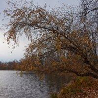 Осень на Татьянке :: Инна Драбкина