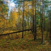 Осень в Подмосковье :: Владимир Брагилевский