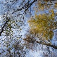 Осеннее небо :: Наиля
