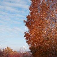 Осень,осень,осень :: Денис Некрасов