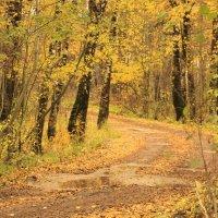 Желтая осенняя дорога. :: веселов михаил