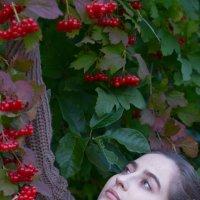 Калина красная :: Alexandr Zenin