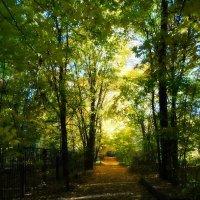 Осенняя дорога :: Наталия Короткова
