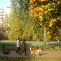 Осенние прогулки :: Елена Семигина