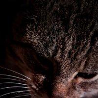 Moje Koty Mimi :: Janusz Wrzesień