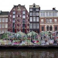 Bloemenmarkt Цветочный рынок Амстердам :: Swetlana V