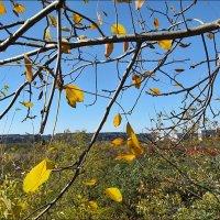 Осень, осень... :: Нина Корешкова
