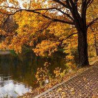 Дуб над озером :: Виктор