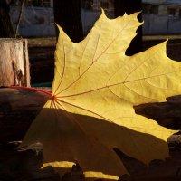 Зацепился кленовый листочек... :: Лидия Бараблина