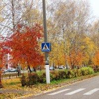 Осень в городе. :: Венера Чуйкова