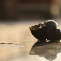 Отражение на камне :: Ольга Косминская