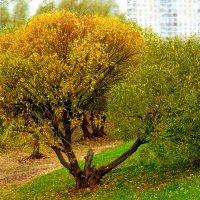 Тон осени желтовато-зелёный. :: Татьяна Помогалова