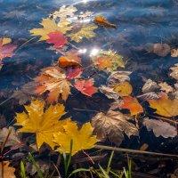 Осенние листья на воде :: Виктор