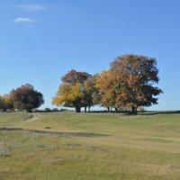 Осень в степи. :: Виктор