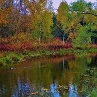 Осень на Нижнем Ламском пруду... :: Sergey Gordoff