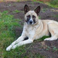 Уличный пёс нашёл свой дом! ... (животные делают нас лучше!) ) :: Елена Хайдукова  ( Elena Fly )
