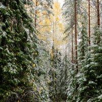 первый снег :: Борис Устюжанин