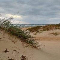 Долгая дорога в дюнах.... И все же к морю вышел я. :: Алекс Б-в