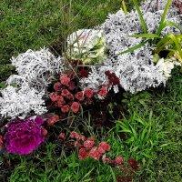 Осенние цветы :: Елена Павлова (Смолова)