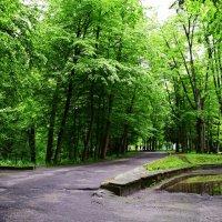 На аллеях Трускавецкого парка :: Татьяна Ларионова
