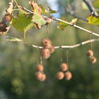 autumn :: Александр Довгий