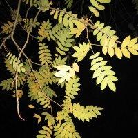 Осенние листья :: Хвостища