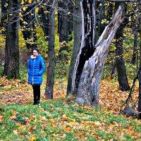 Прогулка по осеннему лесу. :: Михаил Столяров