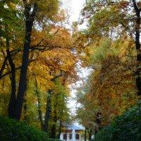 Осень в Летнем саду :: Наталия Короткова