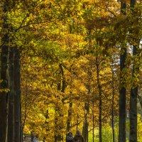 Под сенью листьев золотых :: Александр Петров