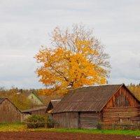 Белорусская деревня! :: Андрей Буховецкий