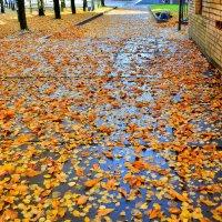 Здесь прошли дождь и ветер... :: Miola
