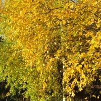 октябрь.. :: Зинаида
