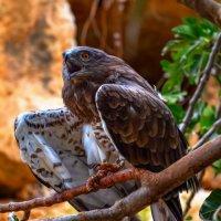 Птичка :: David Lerer