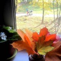 На моем окошке и за окном осень :: Елена Семигина