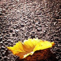 Осень :: Марина Палаева