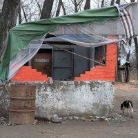 Из жизни собак :: Валерий Михмель